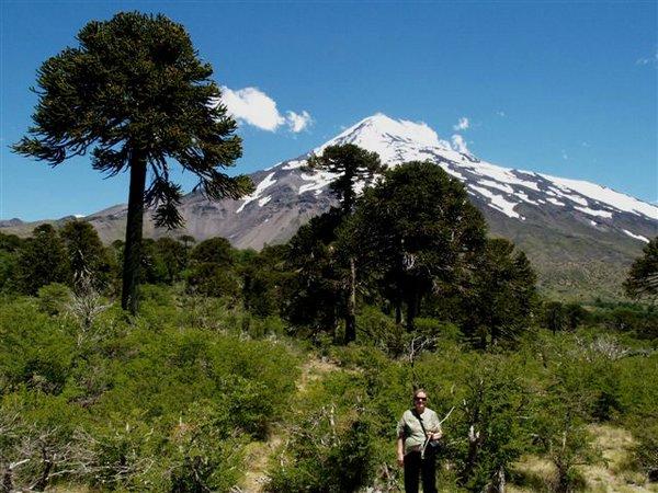 Fotos de arboles chilenos 91