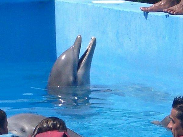 natacion-con-delfines