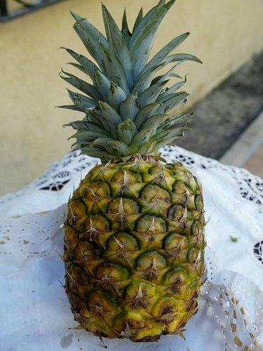 Fotos de Frutas: Piña