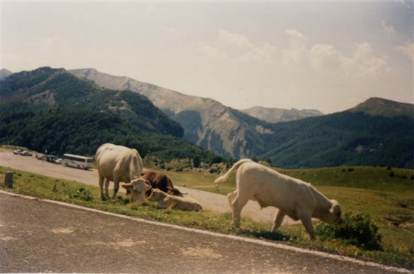 fotos-de-Pirineo-navarro