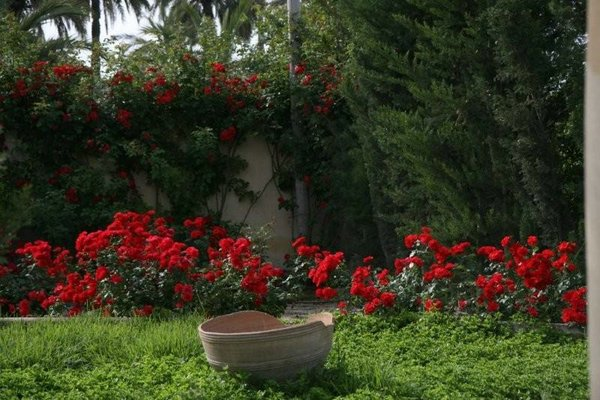 Jardines plantas 01 jpg for Plantas y jardines fotos