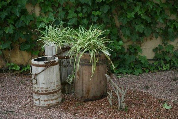 Jardines plantas 13 jpg - Plantas y jardin ...