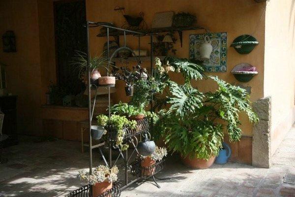 Jardines plantas 14 jpg for Plantas y jardines fotos