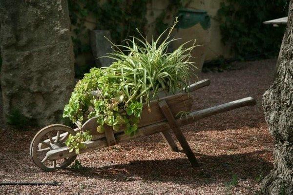 Jardin con rboles y plantas aut ctonas - Arboles y plantas de jardin ...