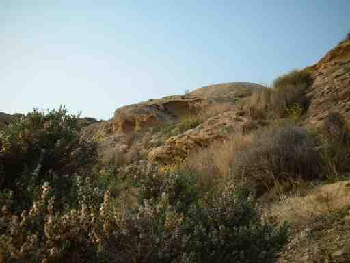 Cabo de las Huertas nº6: CUEVAS Y PLANTAS