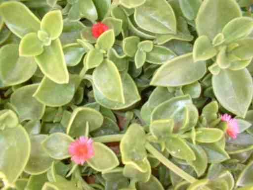Cabo de las Huertas nº9: Florecillas