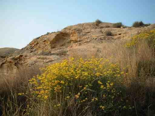 Foto: Cabo de las Huertas nº16: Rocas y flores